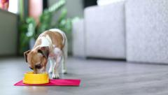 Dog eating front Stock Footage