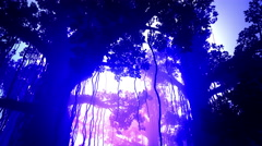 4K Mysterious Deep Jungle in the Sunset Sunrise 3D Animation 4 - stock footage