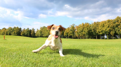 Dog active play Stock Footage