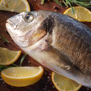 raw dorado fish with rosemary and sea salt - stock photo