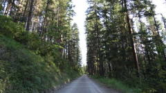 Country road in forest tilt down Stock Footage