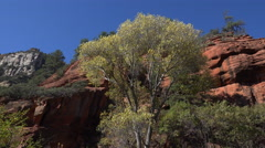 4K Autumn Leaves Fall From Tree In Arizona Sedona Red Rock Stock Footage