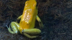 poisonous toad - stock footage