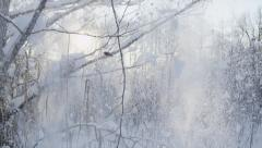 SLOW MOTION: Snow falling off a tree in winter Stock Footage