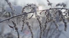CLOSE UP: Sun shining through frozen flower in winter Stock Footage