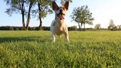 Play dog grass Stock Footage