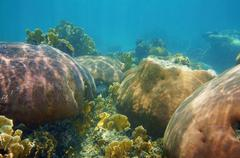 underwater landscape in a stony coral reef - stock photo