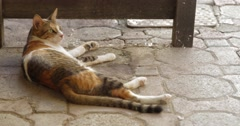Footage of a Cat Laying on the Floor at Mutrah Souk in Muscat, Oman (4K) Stock Footage