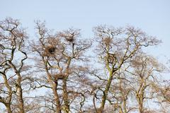 Gray heron colony Stock Photos