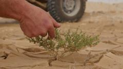 Hand desert plant 4K Stock Footage