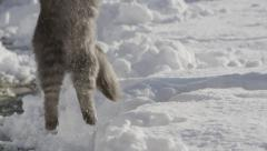 SLOW MOTION: happy cat jumping in the fresh snow Stock Footage