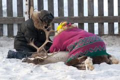 reindeer-Mansi catching and tying reindeer in the corral - stock photo