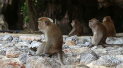 Monkey sit on the rock Stock Footage