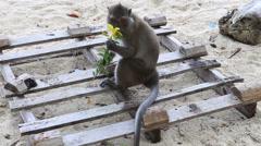 Monkey sit on sand Stock Footage