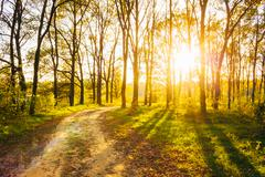 Sunny Day In Summer Forest. Sunbeams Pour Through Trees. Russian - stock photo