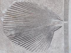 Leaf in a gray concrete Stock Photos