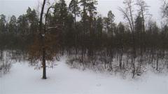 Snow wood. Winter   flights.  Winter Aerial  in 2.7K (2704x1524) Stock Footage