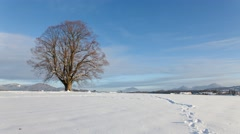 4K Timelapse of rural winter landscape with a large tree and snow in austria - stock footage