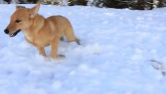 Play with a dogs in the snow Stock Footage