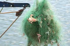 Green fishing net Stock Photos