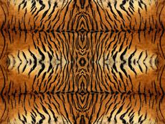 tiger fur pattern - stock illustration