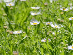 Summer background. Related clips are in my portfolio in 1920x1080. - stock footage