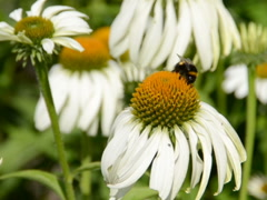 Summer flowers. Related clips are in my portfolio in 1920x1080. - stock footage
