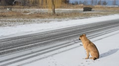 Homeless dog by the side of the road. It starts snowing. Stock Footage