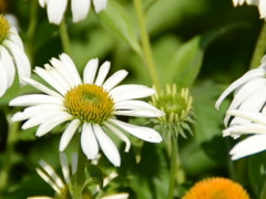 Summer landscape. Related clips are in my portfolio in 1920x1080. - stock footage