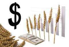 rising graph of grain and money - stock photo