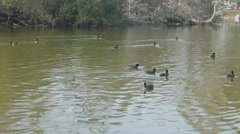 Beautiful Lake View with Ducks 5 Stock Footage