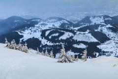 snowstorm in piatra craiului mountains - stock photo