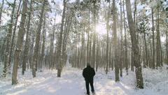 Morning walk in the winter woods Stock Footage