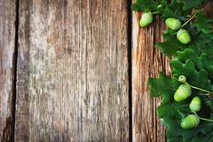 Green acorns Stock Photos