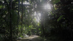 Forest Foot Path on Micronesian Island of Yap Stock Footage
