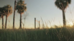 Detail tracking shot through meadow in sunset, slow motion Stock Footage