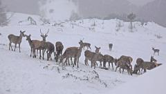 4k deer running in the winter forest, uhd stock video Stock Footage