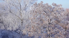 Hoarfrost covered trees Stock Footage