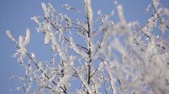 Hoarfrost covered trees brunches on blue sky background - stock footage