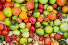 Close up of abundance of variety of tomatoes Stock Photos