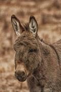 Portrait of a Donkey - stock photo