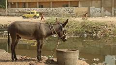 Donkey eating food Stock Footage