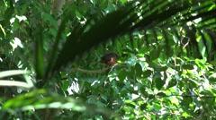 ULTRA HD 4K Beautiful small bird relax tree branch green leaf scratch plumage  Stock Footage