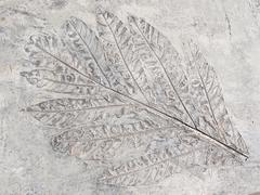 Ancient leaf Stock Photos