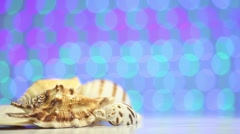 Shell as travel concept on a blurry colorful background - stock footage