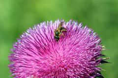 Bee on flower spring season Stock Photos