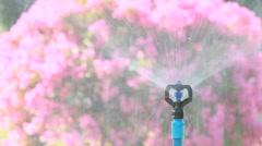 Sprinkler head watering in the garden, HD vdo. Stock Footage