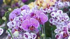 Purple orchid in the garden Stock Footage