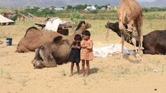 Video 1920x1080 - indian two young boy and camel involved in Pushkar Camel Mela Stock Footage