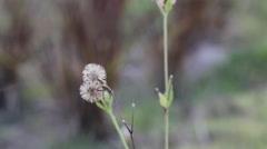Grass flower in arid, video Stock Footage